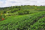 Bất động sản du lịch xanh đang nhận được rất nhiều sự đón nhận – đất rộng 270m2 có SHR – vị trí trung tâm