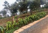 Cần bán gấp 2 lô đất mặt tiền tại Trung Tâm Tp Bảo Lộc giá rẻ.