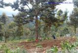Cần bán 2 lô đất mặt tiền tại Trung Tâm Tp Bảo Lộc giá rẻ.