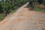 Cần bán 2 miếng đất mặt tiền tại Trung Tâm Tp Bảo Lộc giá rẻ.