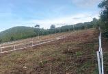 Gia Đình chuyển nơi ở cần bán gấp 570m2 đất ngay cạnh suối giá 650tr gần trung tâm Tp. Bảo Lộc