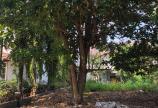 Đất Vị Trí Đẹp View Sông SG Vài Bước Chân, 17 Tr/m2, đường TL8,Ấp 3 Bình Mỹ Củ Chi