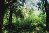 Bán 5000m đất Xuân Mai, Chương Mỹ, Hà Nội giá rẻ cho các nhà đầu tư