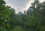 Bán đất Kim Bôi Hòa Bình DT 7981m2 có 350 đất ở