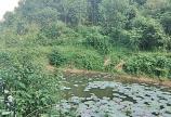 Bán đất Kim Bôi dt 4,5ha có 400m2 thổ cư,gần 1ha đất vườn còn lại là đất rsx