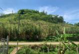 cần bán 3008m2 đất tại Bắc Phong, Cao Phong, Hòa Bình