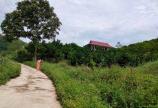 Cần bán DT 18000 ở Kim Boi Hòa Bình có nhà sàn đẹp và vườn cây ăn quả.