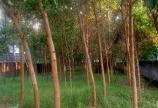 Bán đất Ba Trại, Ba Vì với tổng diện tích 1047m giá đầu tư.